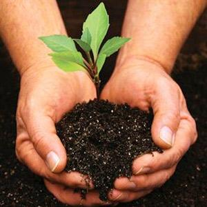Treeplantation